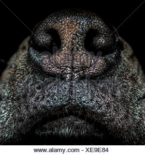 Close up of dog's nose - Stock Photo