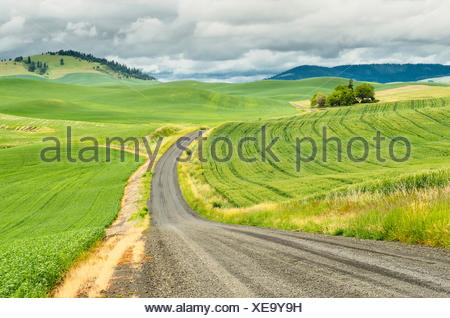 USA, Washington, Palouse, Winding country road - Stock Photo