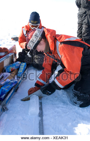Alaska, Bering Sea. Scientists studying ice condiitons and the changing ecosystem due to global warming. A scientist cuts an - Stock Photo
