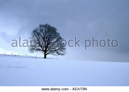 Ein kahler Baum auf weiter Flur im Winter - Stock Photo