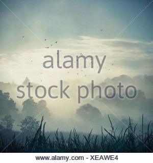 Misty landscape at backlight, composite - Stock Photo