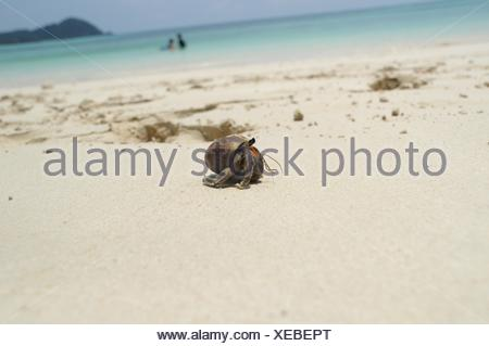 Close-Up Of Hermit Crab On Beach By Sea - Stock Photo