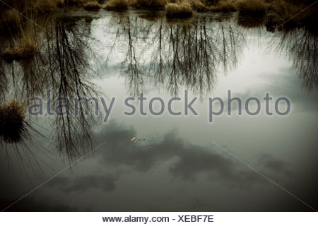 Refections on a wildlife pond in England - Stock Photo