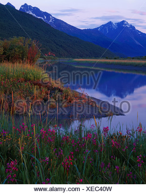 Spring bloom shooting star Dodecatheon pulchellum along Knik River outlet into Knik Arm Cook Inlet Chugach Mountains beyond - Stock Photo