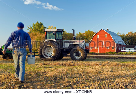 Farmer with a lunch box walking in a field of grain stubble towards his tractor, Grande Pointe, Manitoba, Canada - Stock Photo