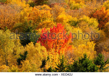 USA, United States, America, New Hampshire, North Woodstock, Woodstock, North America, New England, East Coast, Carroll County, - Stock Photo