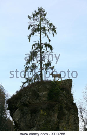 Deer on a rock in the Wehra valley - Stock Photo
