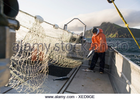 Salmon Fishing In Front Of Cape Pankoff On Unimak Island In The Alaska Department Of Fish And Game 'alaska Peninsula Area' - Stock Photo