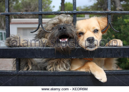 dogs behind fence - Stock Photo