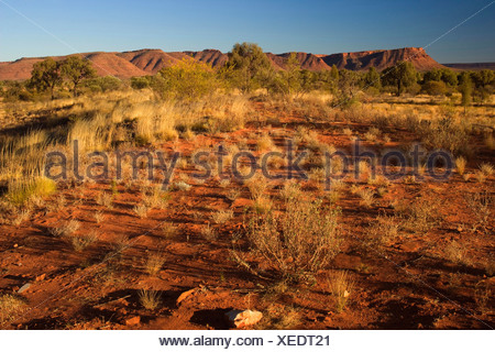 Kings Canyon - red earth, bushland and by sun red ablaze rim cliffs of Kings Canyon in late evening, Australia, Northern Territory, Kings Canyon National Park - Stock Photo
