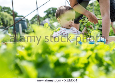 Mother and baby at allotment - Stock Photo