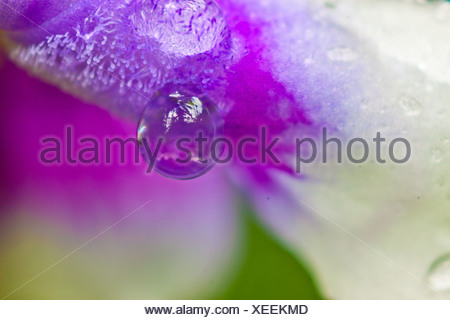 Flower with waterdrops - Stock Photo