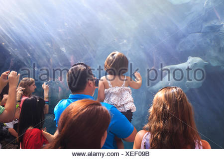 People watching a polar bear swimming underwater at the Journey to Churchill, Assiniboine Park Zoo, Winnipeg, Manitoba, Canada - Stock Photo