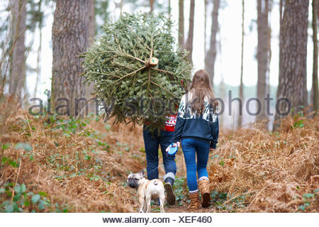 Rear view of young couple carrying Christmas tree on shoulders in woods - Stock Photo