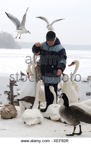Man feeding birds at the Tegeler See, Berlin, Germany - Stock Photo