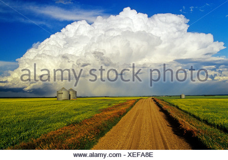 Cumulonimbus cloud mass with gravel road, canola and grain bins in the foreground near Bromhead, Saskatchewan, Canada - Stock Photo