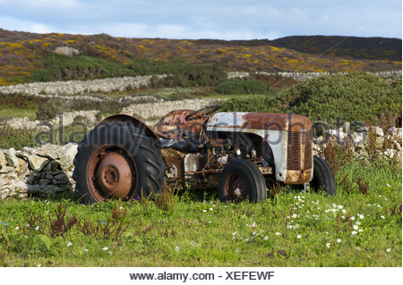 Anglesey Ferguson Grey Fergy T20 Wales coast old rust tractor farm farms farming machine machines machinery agriculture - Stock Photo