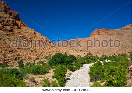 Palm trees, bushes and trees growing in a dried river bed in Ait Mansour Valley, Anti-Atlas Mountains, southern Morocco, Morocco - Stock Photo