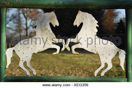 Pferdemotiv - Stock Photo