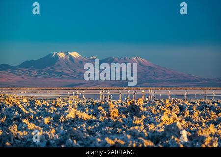 Sonnenuntergang in atacama salar und Chaxa Lagune mit Flamingos - Stockfoto