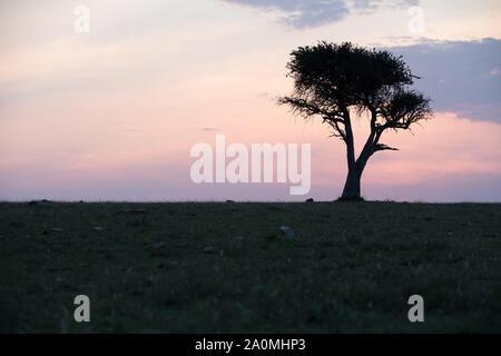 Erstaunlich afrikanischen Sonnenuntergang - Kenia Stockfoto