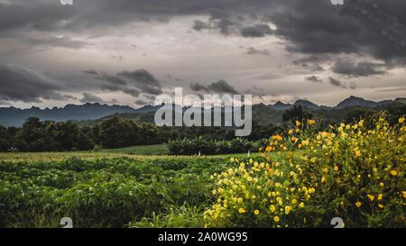 Horizontale panorama tropischen Regenwald in silhouette Stil mit Bäume und Berge, Dschungel Konzept - Stockfoto