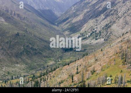 Bergige Wald und Tal, wo ein massives Feuer gebrannt und jetzt regrows, entlang des Pacific Crest Trail in der Nähe von Hart-Pass, Wüste, Okanog Pasayten - Stockfoto