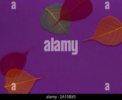 Bunte Skelett Blätter auf lila Hintergrund. Herbst Herbst Vorlage. - Stockfoto