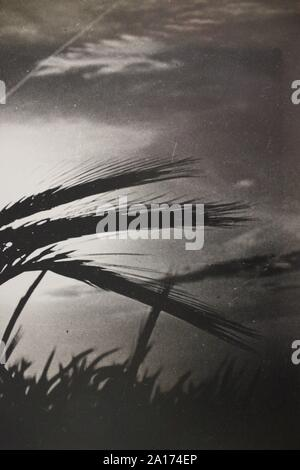 Feine schwarze und weiße Kunst Fotografie von den 1970er Jahren von Weizen Gras wachsen in der Sonne. - Stockfoto