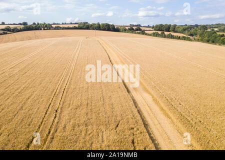 Luftbild der Erntezeit - Stockfoto