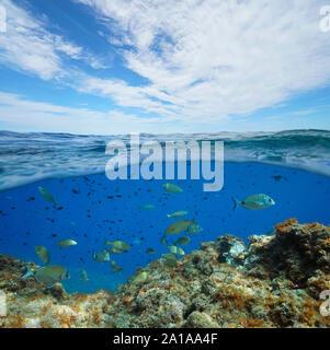Seascape des Mittelmeers, viele Fische unter Wasser und blauer Himmel mit Wolken, geteilte Ansicht über und unter Wasser Oberfläche, Frankreich, Occitanie - Stockfoto