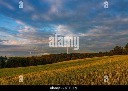 Sonnenuntergang über Weizenfeld, Mosel Deutschland. - Stockfoto