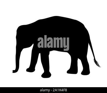 Elefant Silhouette auf weißem Hintergrund Vektor isoliert - Stockfoto