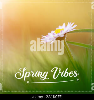"""In der Nähe Bild von Daisy Blüten im Frühling, Text """"Vibes"""" - Stockfoto"""