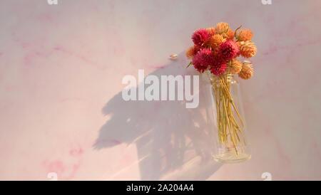 Ein Bündel von bunten getrocknet Globus amaranth Blumen in einer Glasflasche, auf einem rosa Hintergrund, mit leeren Raum auf der linken Seite. - Stockfoto