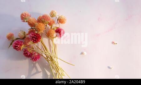 Ein Bündel von bunten getrocknet Globus amaranth Blumen auf einem rosa Hintergrund, mit leeren Raum auf der rechten Seite. - Stockfoto