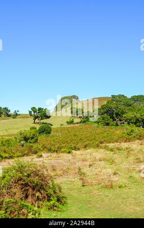 Schönes Fanal auf der Insel Madeira, Portugal. In der Hochebene von Paul da Serra durch den Laurissilva Wald umgeben. Alten lorbeerbäumen fotografiert auf einer klaren sonnigen Tag. Touristische Attraktion. - Stockfoto