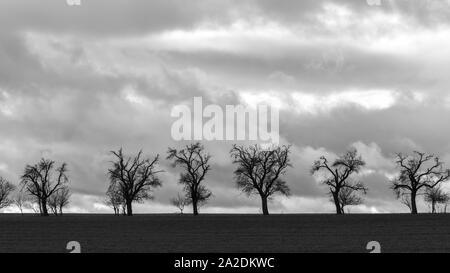 Eine Gruppe von kahlen Bäumen am Rand des Feldes - Stockfoto