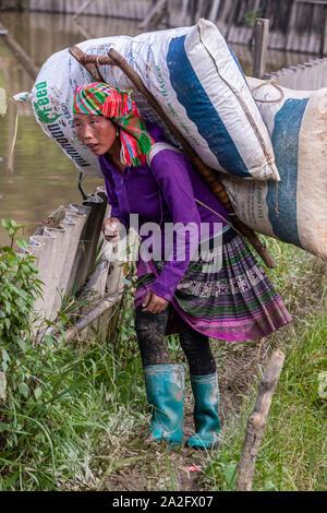 Weibliche Arbeitnehmer in Terrasse Reisfelder, Mu Cang Chai, in der Nähe von Sapa, Nordvietnam - Stockfoto