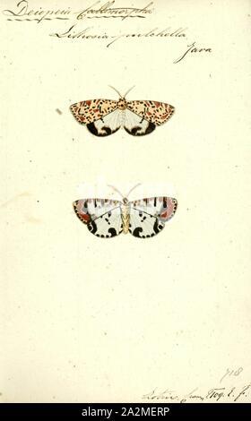 Deiopeia, Drucken, Utetheisa ist eine Gattung der Tiger Motten in der Familie Erebidae. Die Gattung wurde zuerst von Jakob Hübner 1819 beschrieben. - Stockfoto