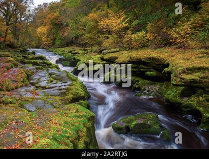 Herbst Farbe am Strid, eine gefährliche Einengung der River Wharfe in Bolton Abbey, die mehrere Leben aufgrund der starken Strömung behauptet hat. - Stockfoto