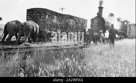 Negative - Henty, Victoria, vor 1930, zwei Elefanten eine Ware Lkw wieder auf den Weg nach einem Zirkus Zug am Henty Bahnhof entgleist. Eine Gruppe von Menschen beobachten die beiden Elefanten. Die DD-Klasse Dampflok Nr.794 wartet auf einen benachbarten Track. Nr. 794 wurde an der Victorian Railways Newport Workshops in 1914 gebaut (gebaut als Dd 948, reclassed und neu nummeriert als DD537, DD794, D2 794 und dann D3 630 - Stockfoto