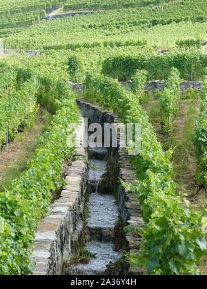 Bewässerungskanal in einem Weinberg in der Schweiz - Stockfoto