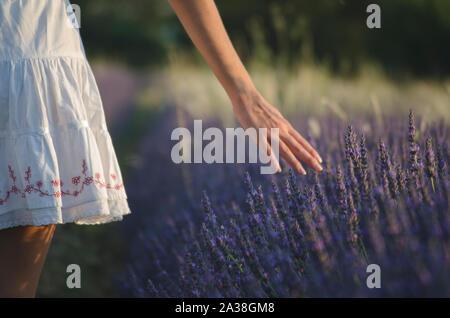 Ansicht der Rückseite ein junges Mädchen zu Fuß durch einem lavendelfeld in der Provence, Frankreich - Stockfoto