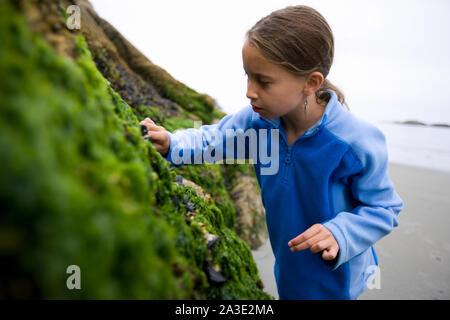 Junge Mädchen auf der Suche nach Muscheln auf einem bemoosten Felsen. - Stockfoto