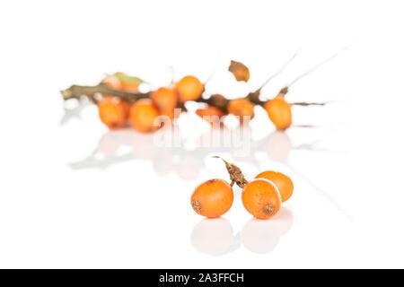 Menge ganze Reife orange Sanddorn berry Drei im Fokus auf weißem Hintergrund - Stockfoto