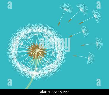 Weiß Löwenzahn Samen durch Wind blauen Hintergrund geblasen. Vector Illustration. - Stockfoto