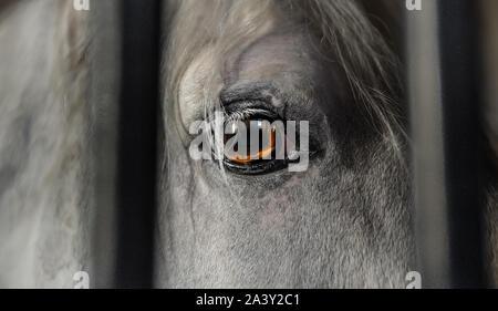 Schöne, weiße und graue Pferd. Nahaufnahme von seiner großartigen Auge (orange wie Flammen). Tier hinter Gittern in einem Stall. Traurig. - Stockfoto