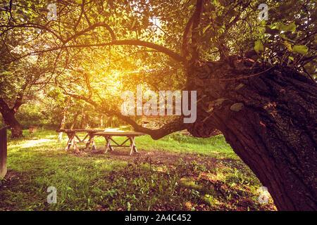 Holz- alten, Sitzbank und Tisch, Sitzbereich unter Baum im Wald. Picknickplatz - Stockfoto