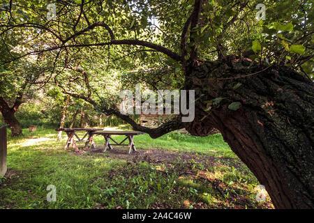 Holz- alten, Sitzbank und Tisch, Sitzbereich unter Baum im Wald - Stockfoto